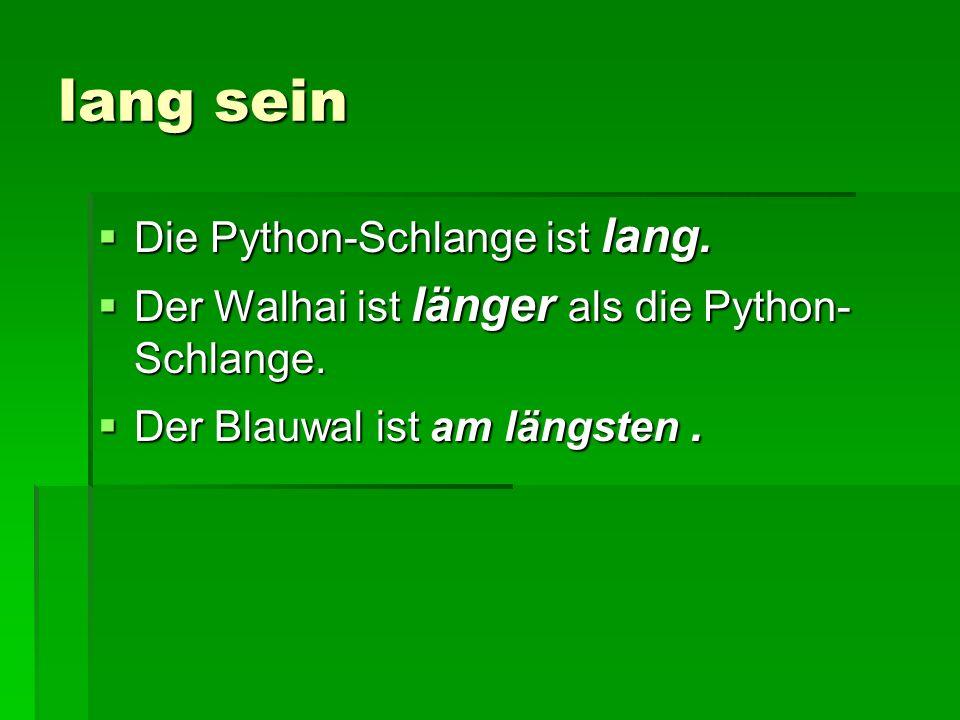 lang sein Die Python-Schlange ist lang.
