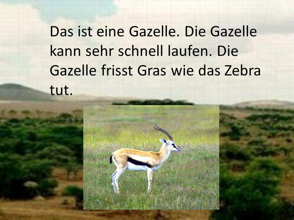 Das ist eine Gazelle. Die Gazelle kann sehr schnell laufen