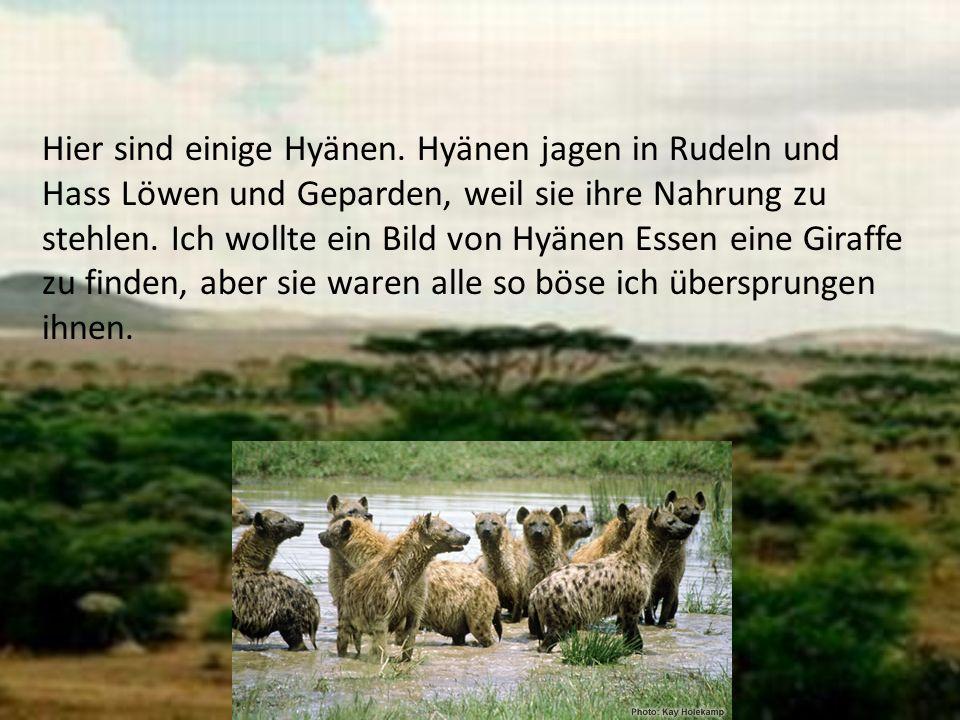 Hier sind einige Hyänen