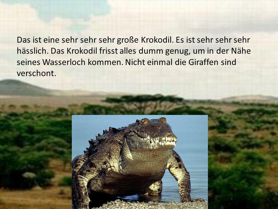 Das ist eine sehr sehr sehr große Krokodil