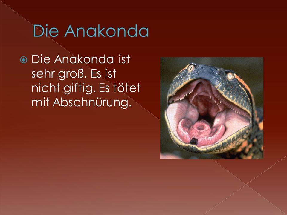Die Anakonda Die Anakonda ist sehr groß. Es ist nicht giftig. Es tötet mit Abschnürung.
