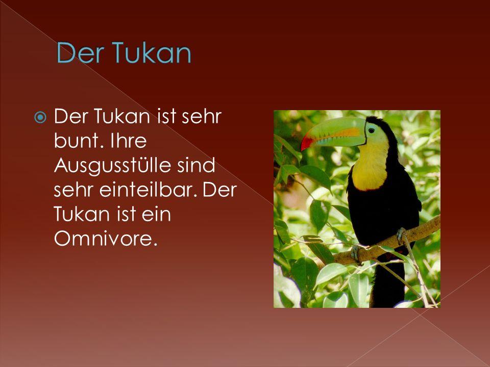 Der Tukan Der Tukan ist sehr bunt. Ihre Ausgusstülle sind sehr einteilbar.