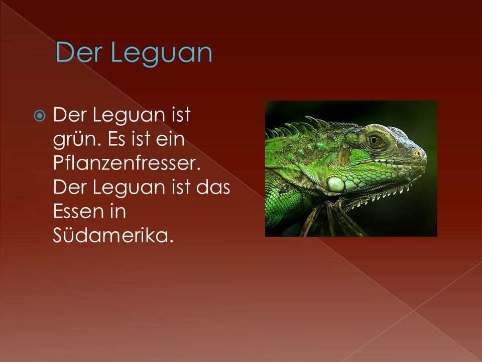 Der Leguan Der Leguan ist grün. Es ist ein Pflanzenfresser. Der Leguan ist das Essen in Südamerika.