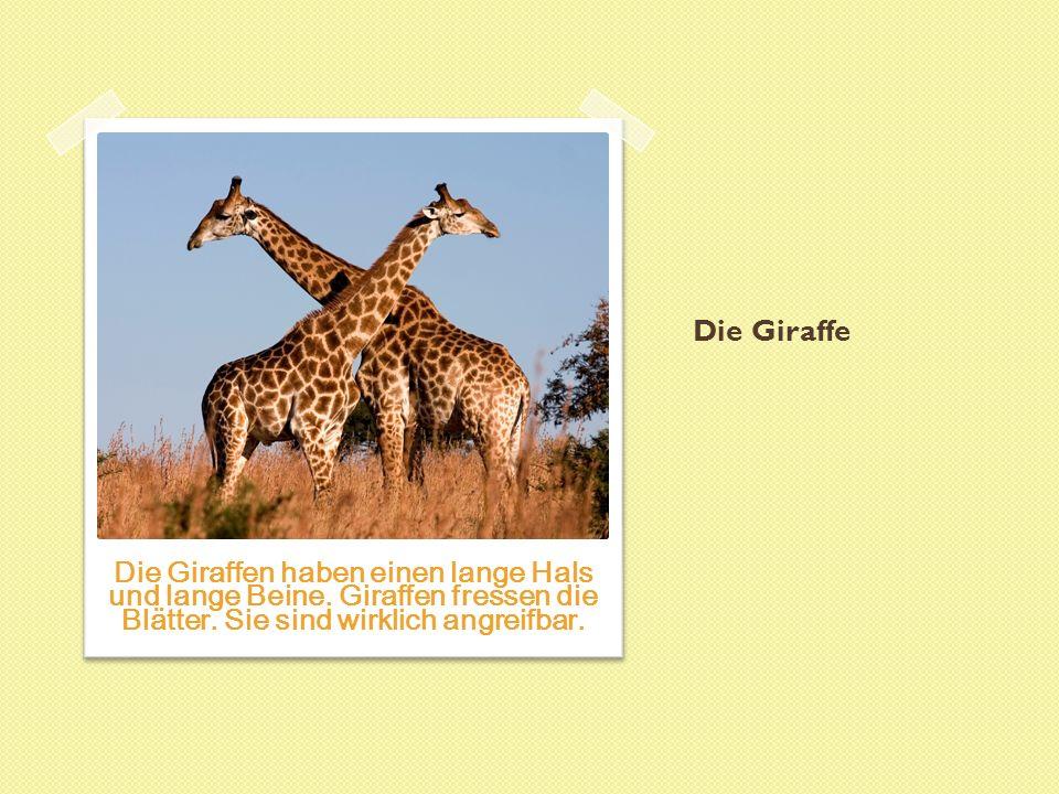 Die Giraffe Die Giraffen haben einen lange Hals und lange Beine.