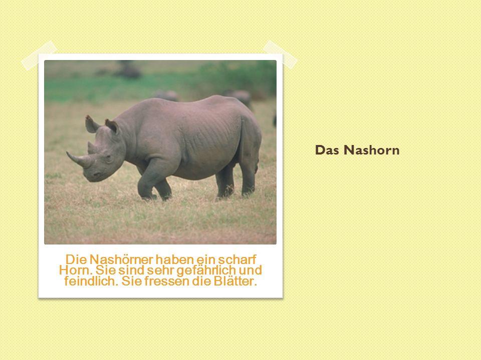 Das Nashorn Die Nashörner haben ein scharf Horn. Sie sind sehr gefährlich und feindlich.