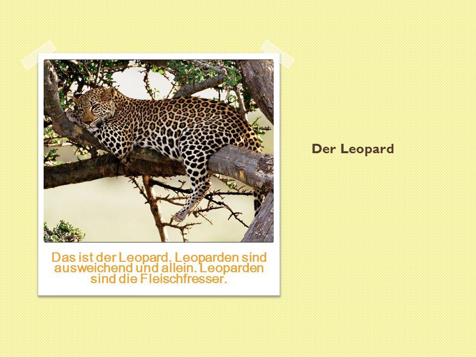 Der Leopard Das ist der Leopard. Leoparden sind ausweichend und allein.