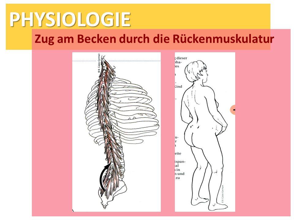 Zug am Becken durch die Rückenmuskulatur
