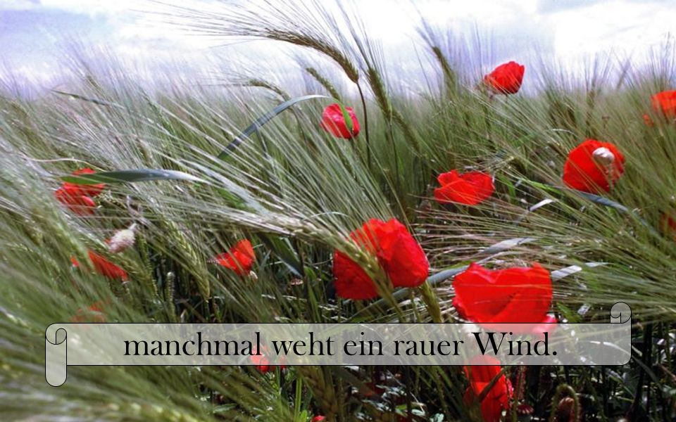 manchmal weht ein rauer Wind.