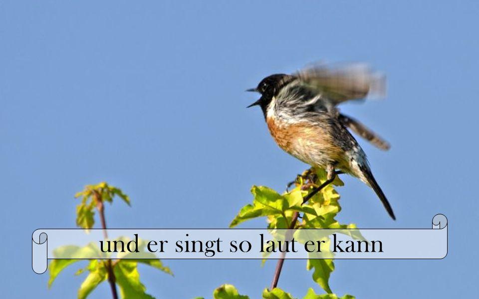 und er singt so laut er kann
