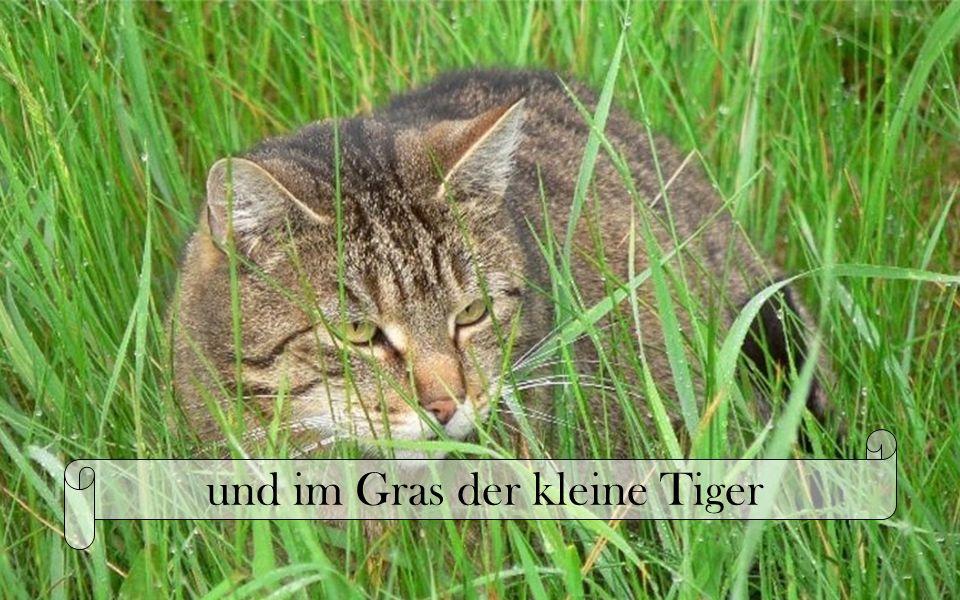 und im Gras der kleine Tiger