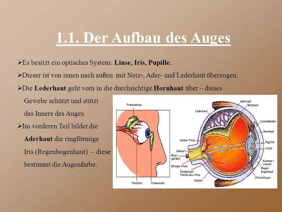1.1. Der Aufbau des Auges Es besitzt ein optisches System: Linse, Iris, Pupille.