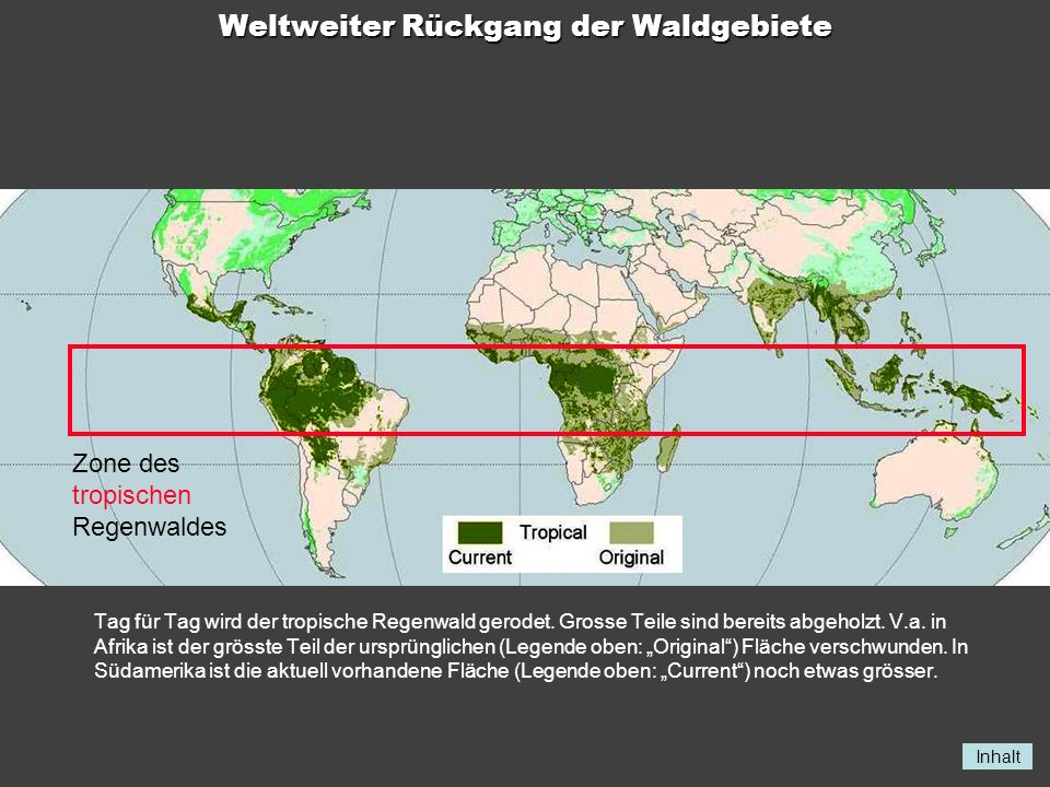 Weltweiter Rückgang der Waldgebiete