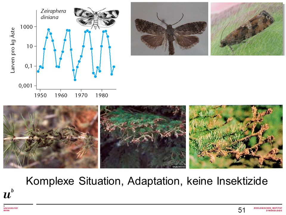 Komplexe Situation, Adaptation, keine Insektizide