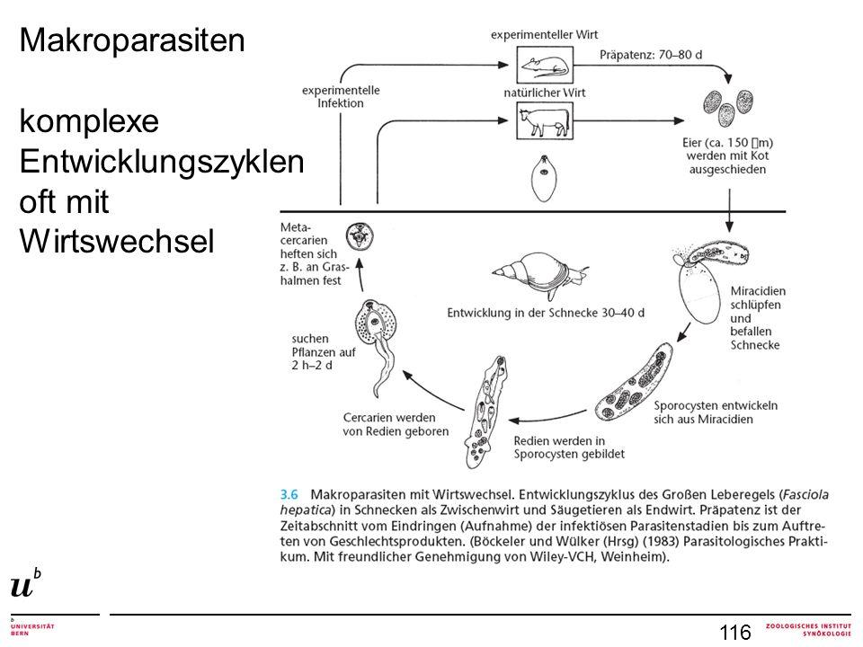 Makroparasiten komplexe Entwicklungszyklen oft mit Wirtswechsel 116