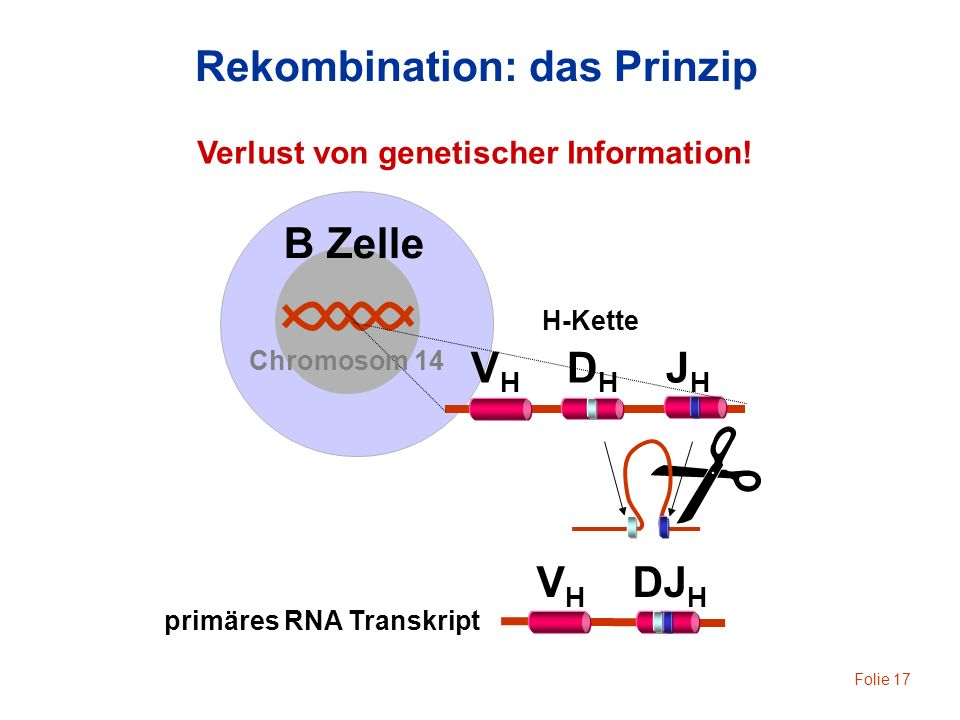 Rekombination: das Prinzip
