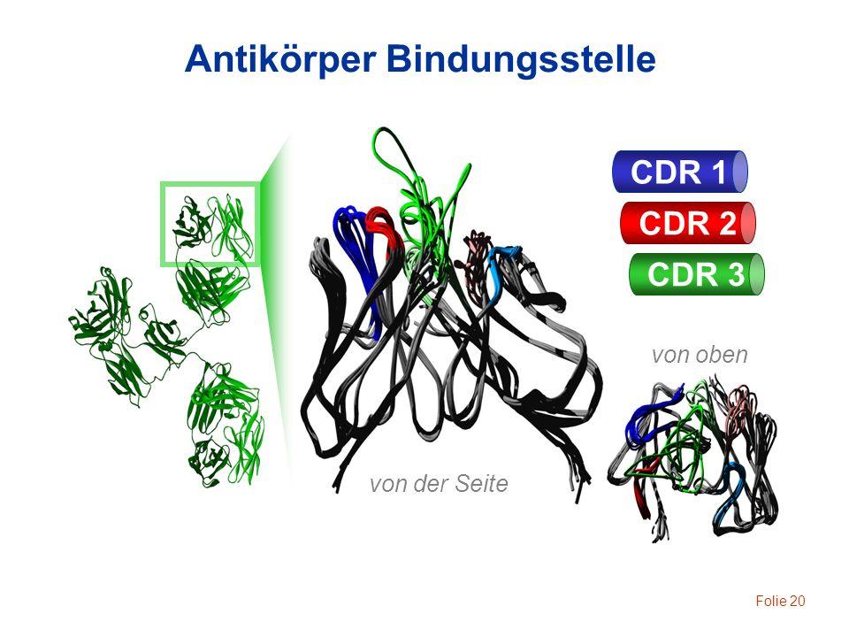 Antikörper Bindungsstelle
