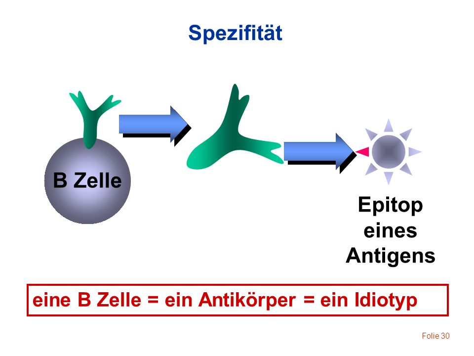 Spezifität Epitop eines Antigens