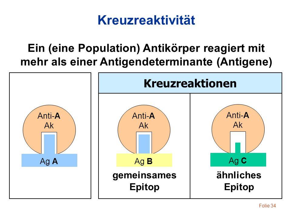 Kreuzreaktivität Ein (eine Population) Antikörper reagiert mit
