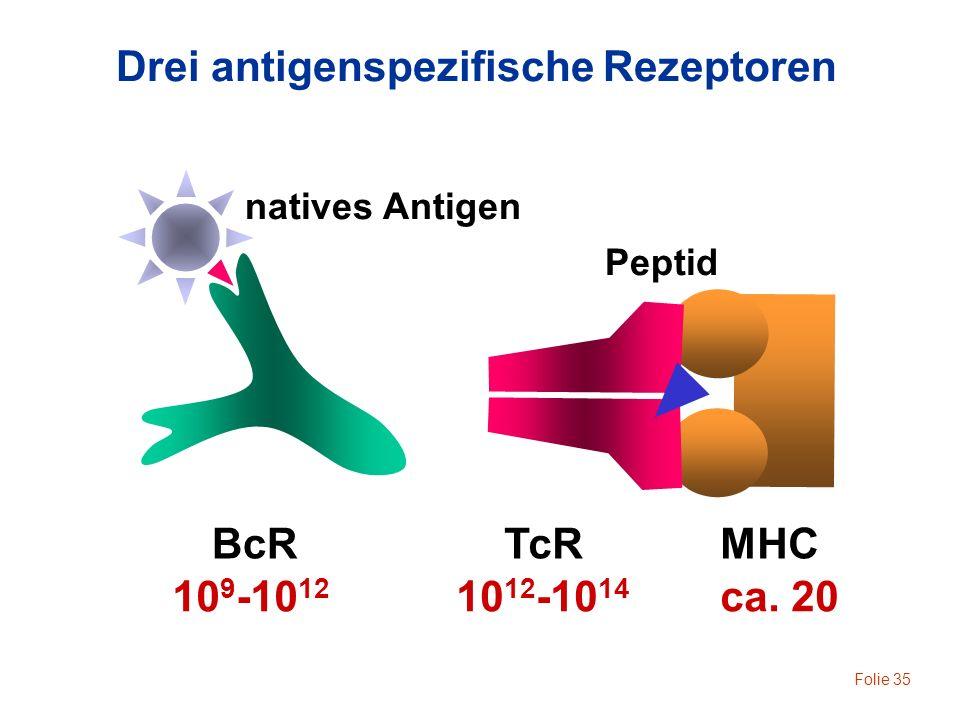 Drei antigenspezifische Rezeptoren