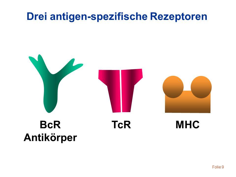 Drei antigen-spezifische Rezeptoren