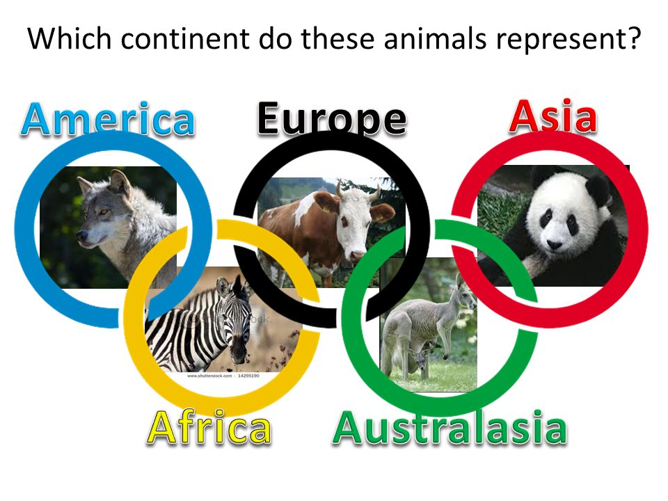 Which continent do these animals represent