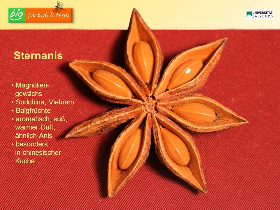 Sternanis Magnolien- gewächs Südchina, Vietnam Balgfrüchte