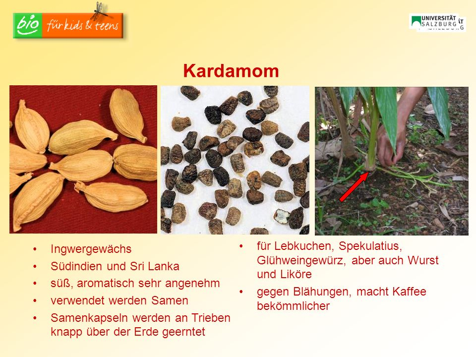 Kardamom für Lebkuchen, Spekulatius, Glühweingewürz, aber auch Wurst und Liköre. gegen Blähungen, macht Kaffee bekömmlicher.