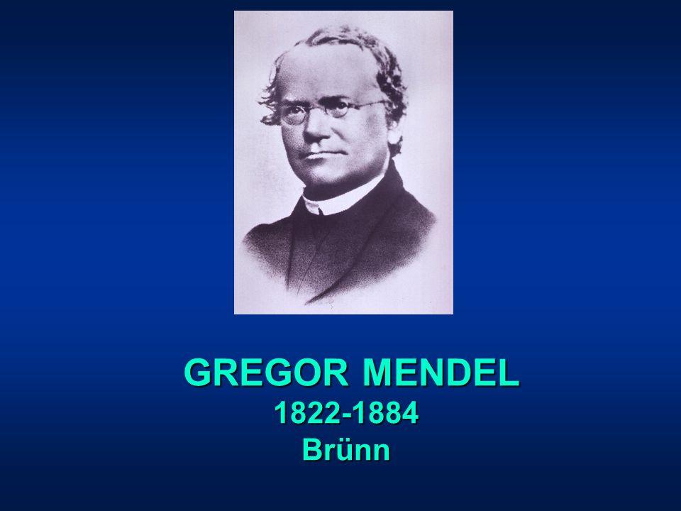 GREGOR MENDEL 1822-1884 Brünn