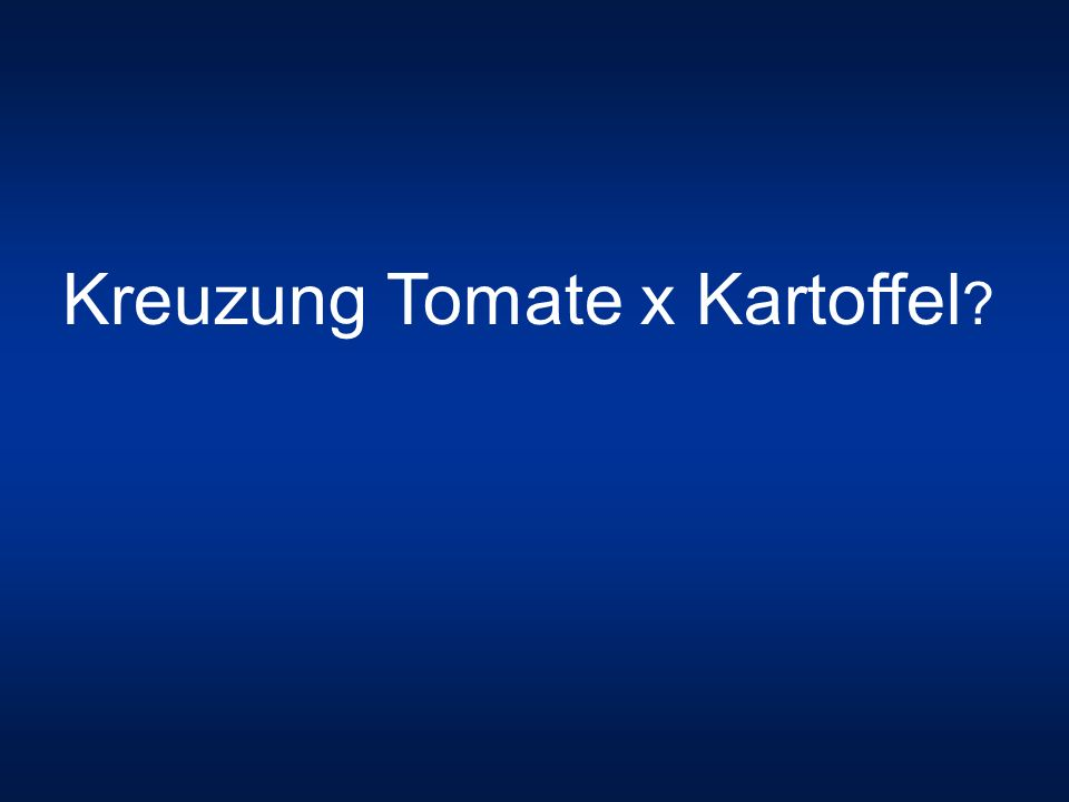 Kreuzung Tomate x Kartoffel