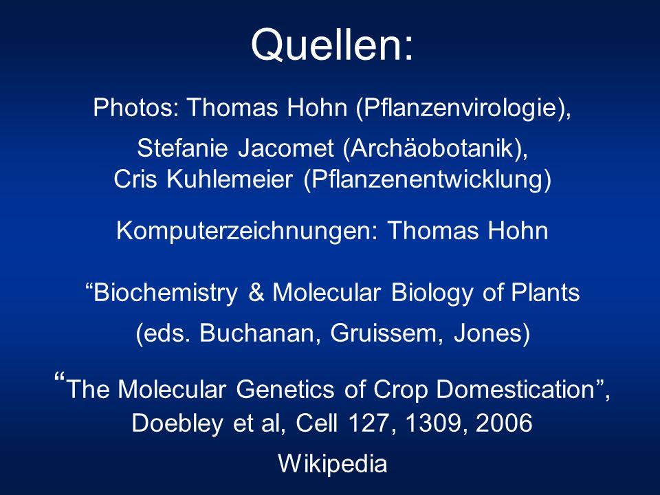 Quellen: Photos: Thomas Hohn (Pflanzenvirologie), Stefanie Jacomet (Archäobotanik), Cris Kuhlemeier (Pflanzenentwicklung)