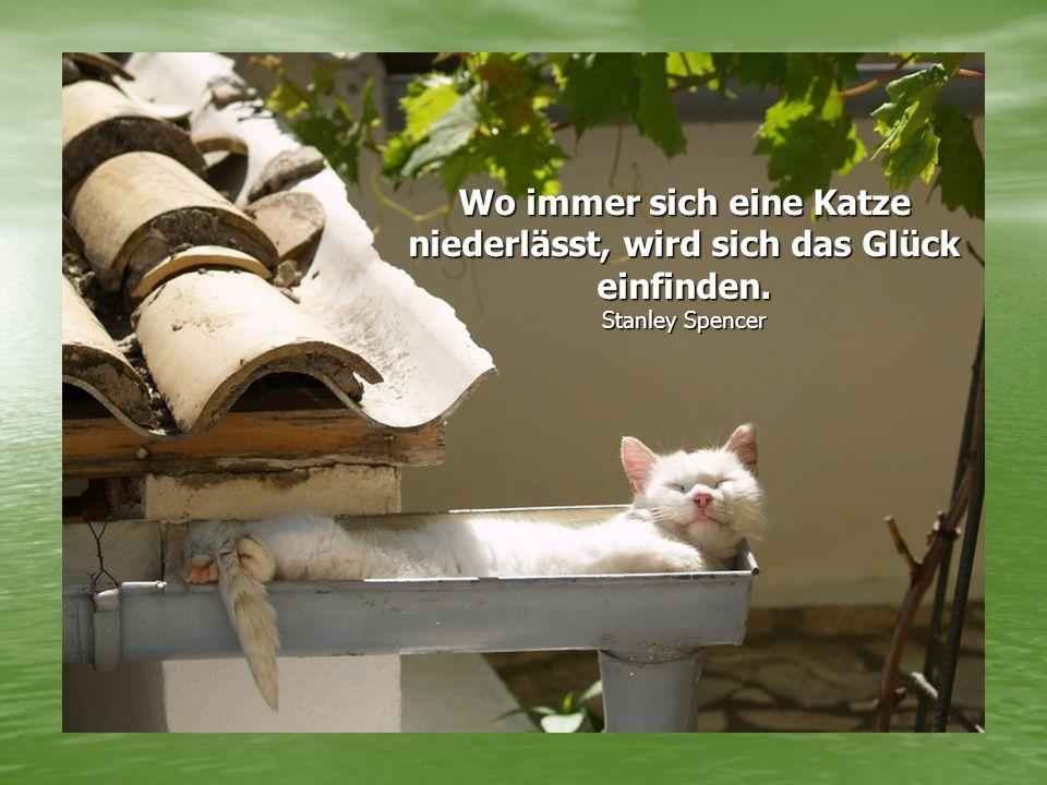 Wo immer sich eine Katze niederlässt, wird sich das Glück einfinden