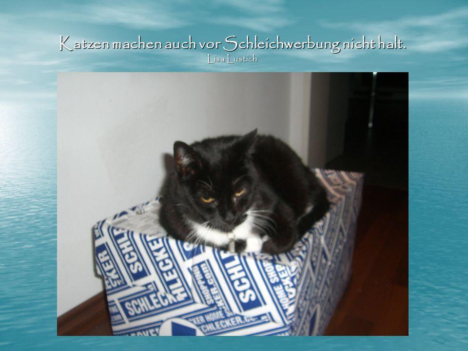 Katzen machen auch vor Schleichwerbung nicht halt. Lisa Lustich
