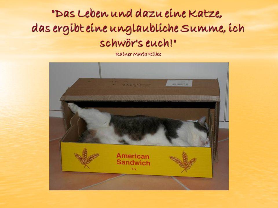 Das Leben und dazu eine Katze, das ergibt eine unglaubliche Summe, ich schwör s euch! Rainer Maria Rilke