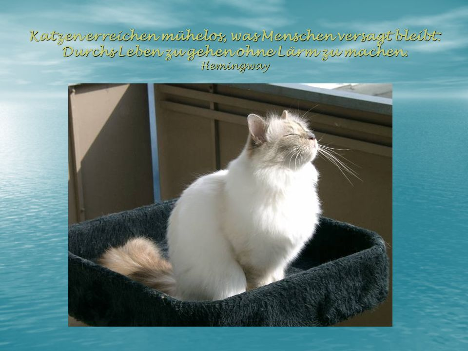 Katzen erreichen mühelos, was Menschen versagt bleibt: Durchs Leben zu gehen ohne Lärm zu machen.