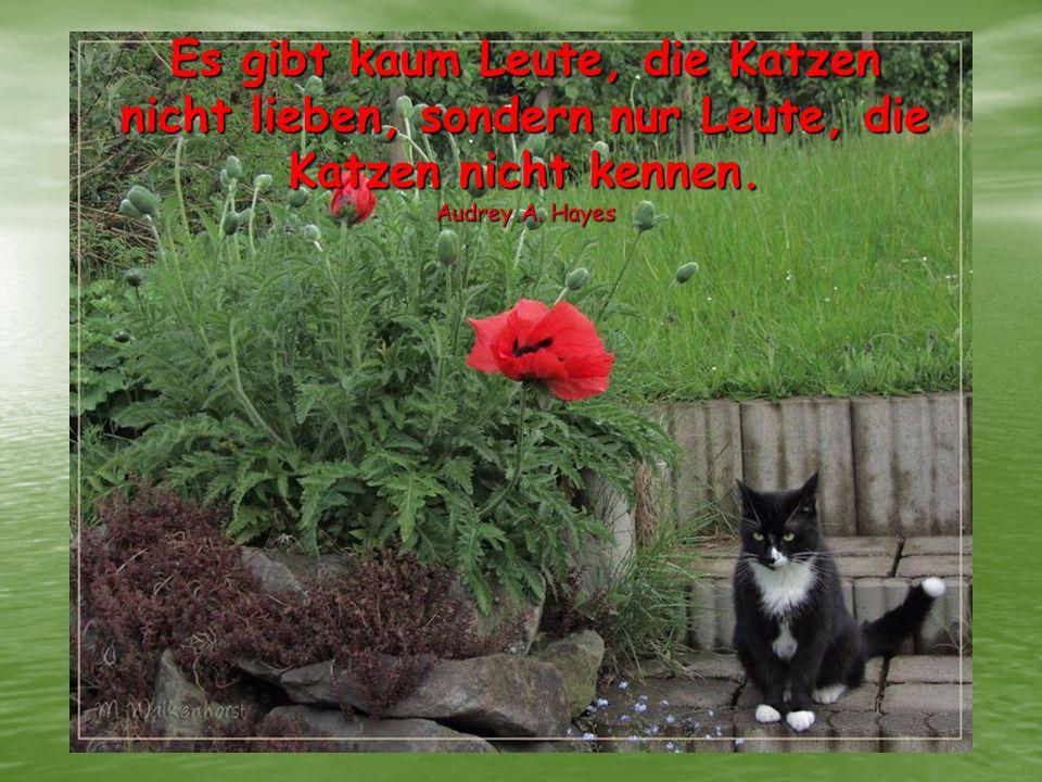 Es gibt kaum Leute, die Katzen nicht lieben, sondern nur Leute, die Katzen nicht kennen.