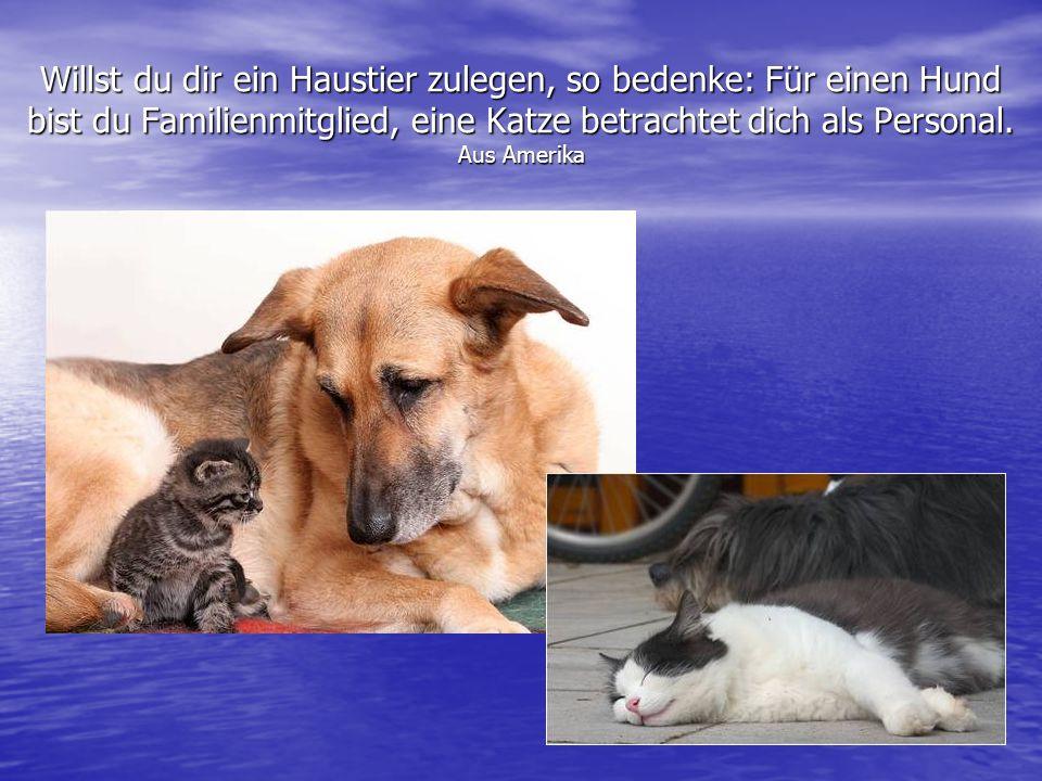 Willst du dir ein Haustier zulegen, so bedenke: Für einen Hund bist du Familienmitglied, eine Katze betrachtet dich als Personal.