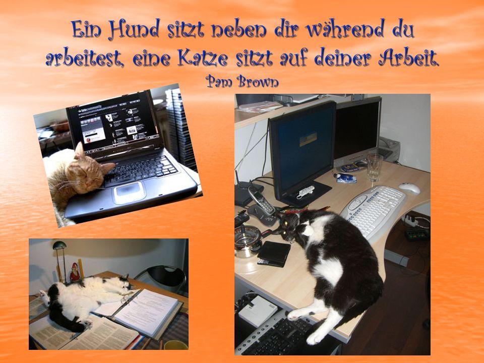 Ein Hund sitzt neben dir während du arbeitest, eine Katze sitzt auf deiner Arbeit. Pam Brown