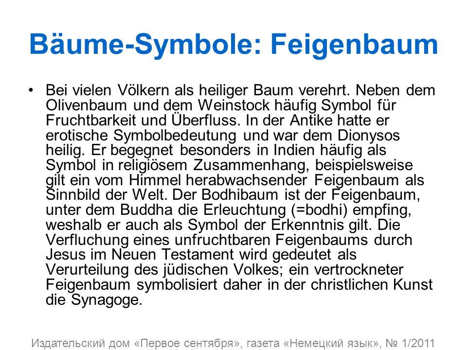 Bäume-Symbole: Feigenbaum