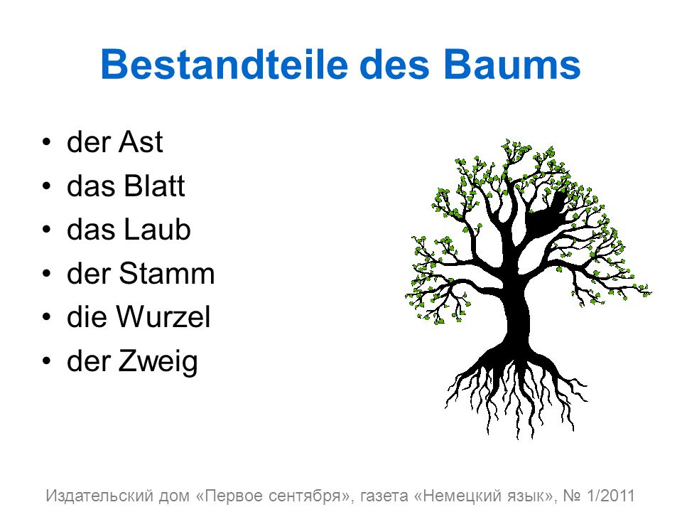 Bestandteile des Baums