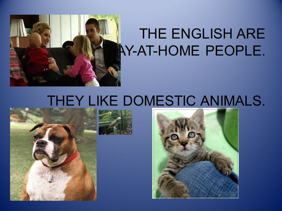 THE ENGLISH ARE STAY-AT-HOME PEOPLE. THEY LIKE DOMESTIC ANIMALS.