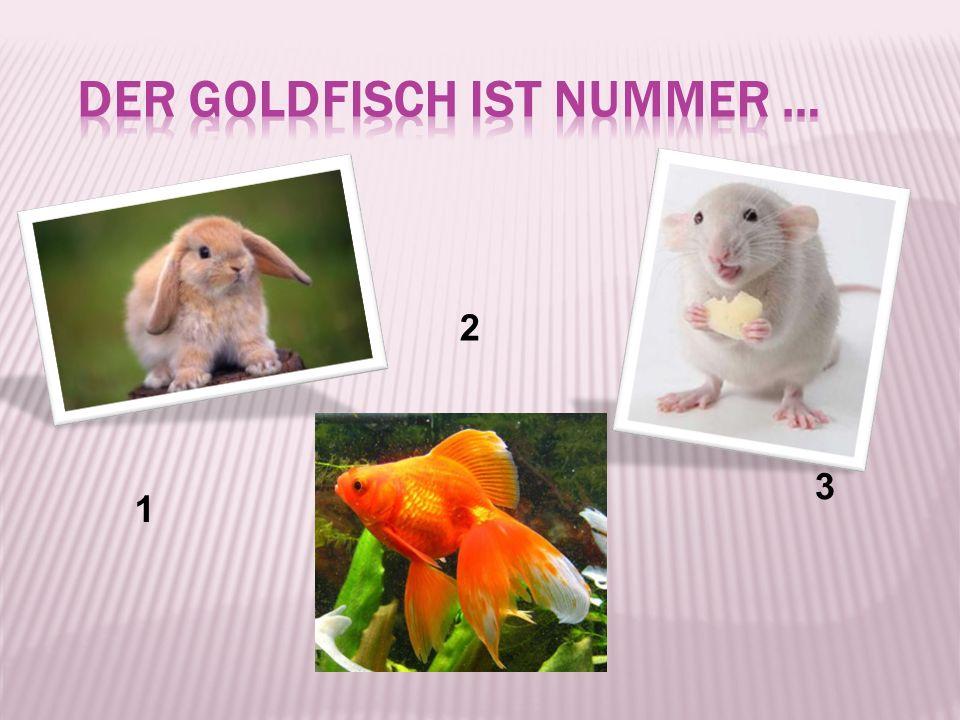 der Goldfisch ist Nummer …