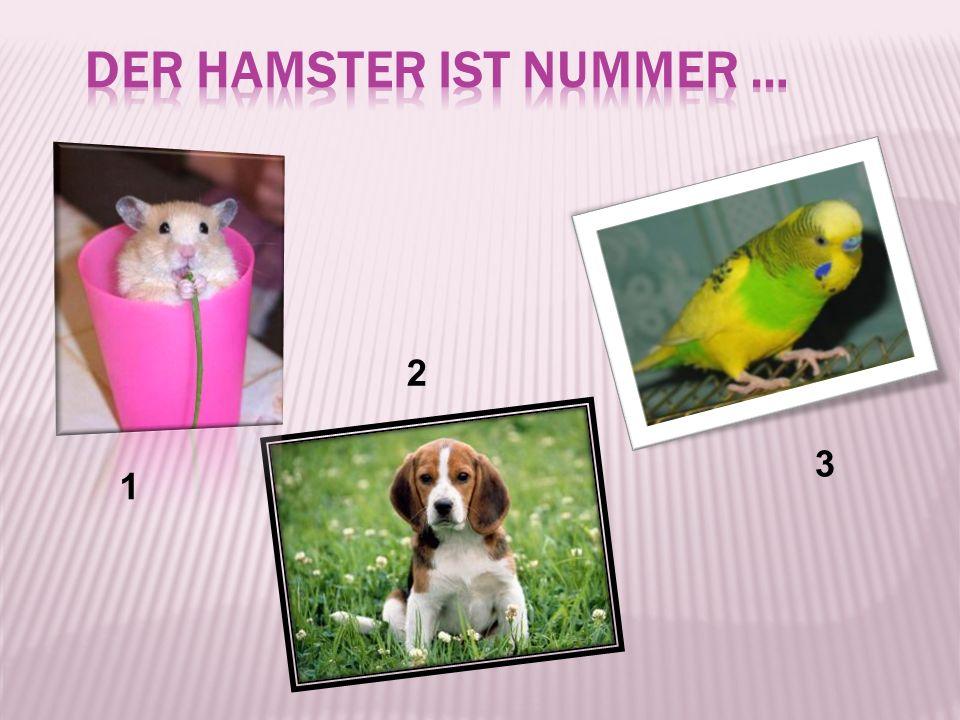 der Hamster ist Nummer …