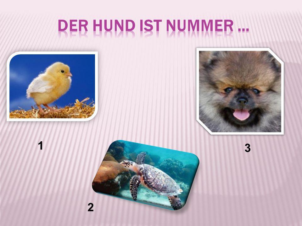 der Hund ist Nummer … 1 3 2