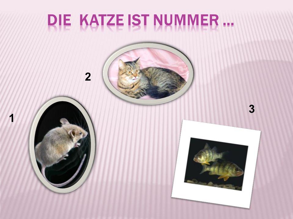 die Katze ist Nummer … 2 3 1