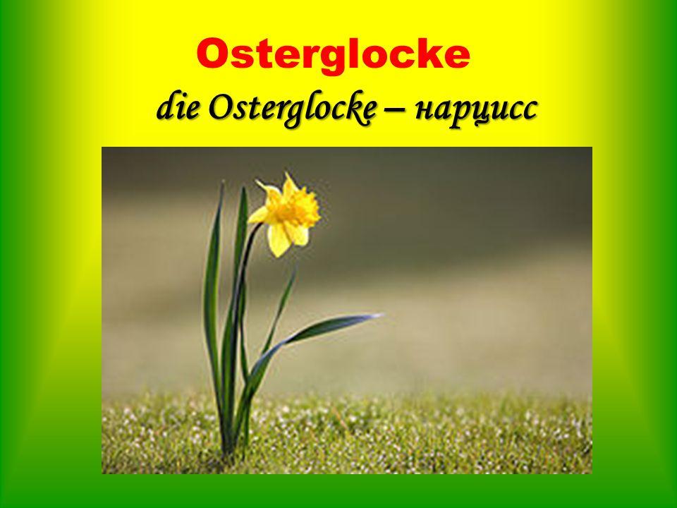 die Osterglocke – нарцисс