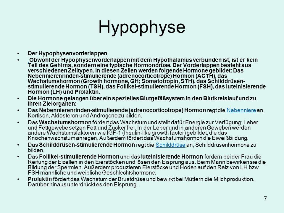 Hypophyse Der Hypophysenvorderlappen