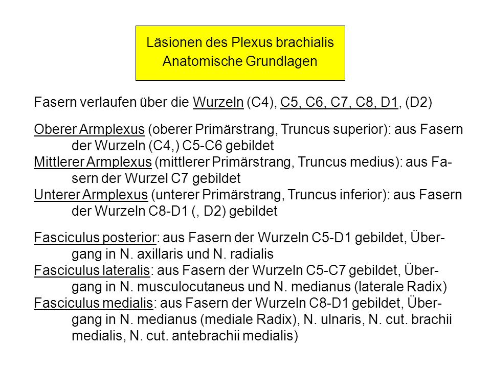 Läsionen des Plexus brachialis Anatomische Grundlagen
