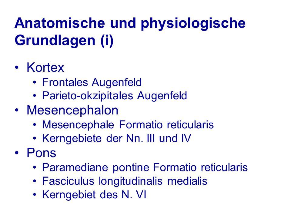 Anatomische und physiologische Grundlagen (i)