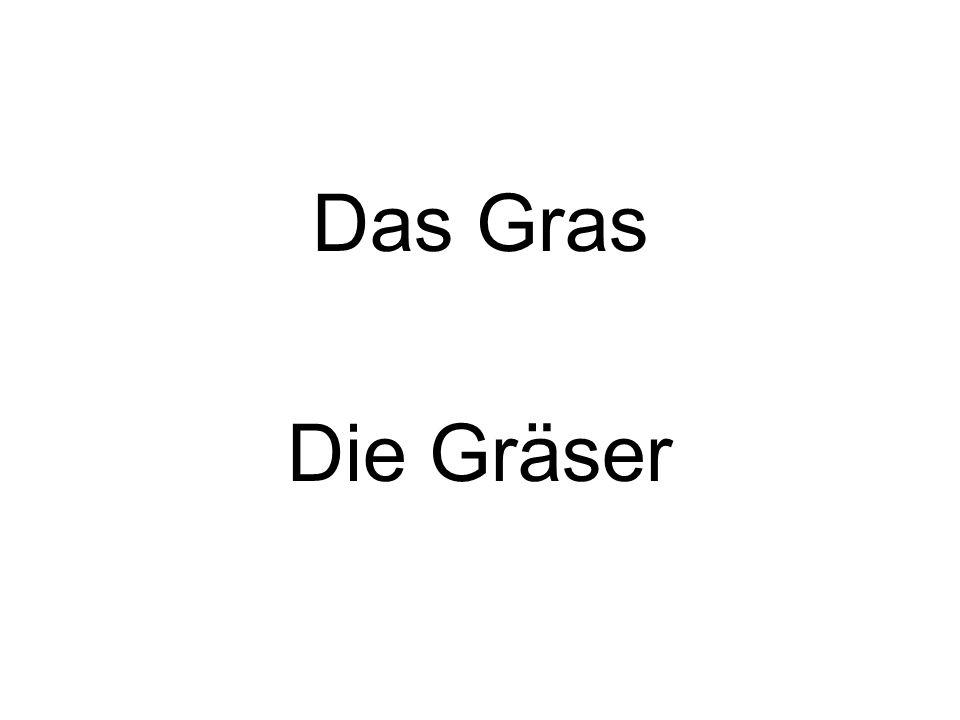 Das Gras Die Gräser