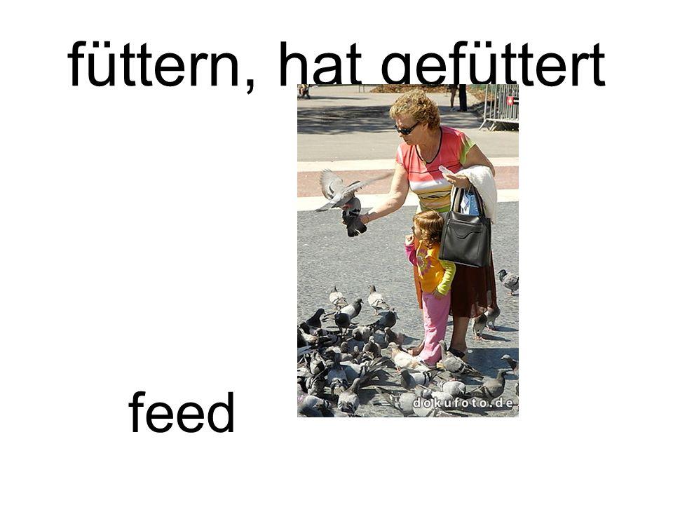 füttern, hat gefüttert feed